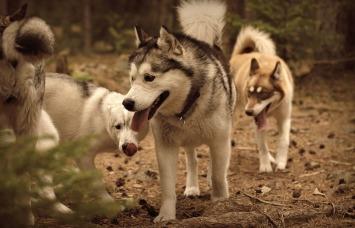Karak, Ayla och Wilma