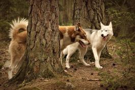 Wilma och Ayla