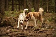 Ayla och Wilma