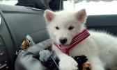 Hiku var tålmodig och positiv under resan hem