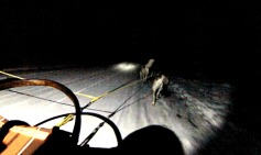 mushing-in-the-dark_moment